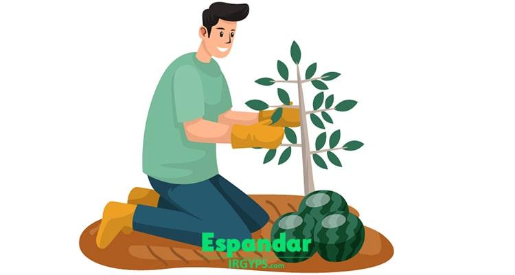کاربرد گچ در کشاورزی